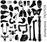 internal organs in white and... | Shutterstock . vector #73217173