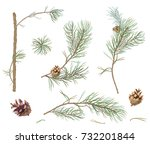 Collection Of Pine Branches And ...