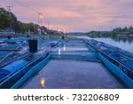morning time  fish nile tiapia  ...   Shutterstock . vector #732206809