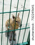 Small photo of American Mira is looking through the fence of the zoo.