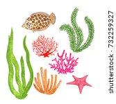 watercolor set or coral ... | Shutterstock . vector #732259327