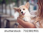 Stock photo welsh corgi pembroke puppy on its owners hands 732381901