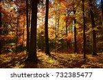 autumn forest | Shutterstock . vector #732385477