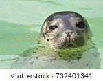 seal | Shutterstock . vector #732401341
