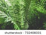 green fern texture. leaf... | Shutterstock . vector #732408331