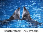 dolphins in the ocean. dolphins ...   Shutterstock . vector #732496501