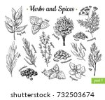 herbs and spices. hand drawn... | Shutterstock . vector #732503674