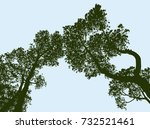 silhouettes of the spruce trees | Shutterstock .eps vector #732521461