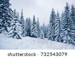 scenic image of spruces tree.... | Shutterstock . vector #732543079