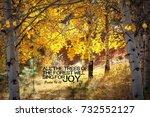 Fall Aspen Tree Grove With A...