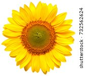 Flower Of Sunflower Isolated O...