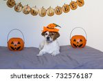cute young small dog lying on... | Shutterstock . vector #732576187