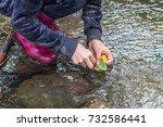 chestnut boat  | Shutterstock . vector #732586441
