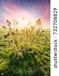 wildflowers in the grasslands | Shutterstock . vector #732708829