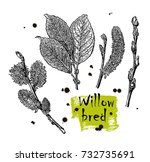 vector leaves  flowers and... | Shutterstock .eps vector #732735691