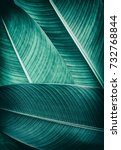 Tropical Palm Foliage Texture ...