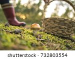 an edible mushroom covered with ... | Shutterstock . vector #732803554