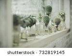 Plant In Glass Bottle  Cactus...