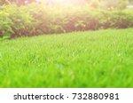 green lawn  backyard for... | Shutterstock . vector #732880981