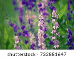 background from tender soft... | Shutterstock . vector #732881647