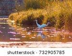 pair of egrets in the creek. | Shutterstock . vector #732905785