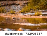 small bird hunting in the creek. | Shutterstock . vector #732905857