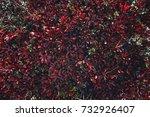 nature backgrounds. natural...   Shutterstock . vector #732926407