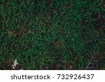 nature backgrounds. natural... | Shutterstock . vector #732926437