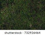 nature backgrounds. natural... | Shutterstock . vector #732926464