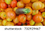 tomatoes and eggplant top lay... | Shutterstock . vector #732929467