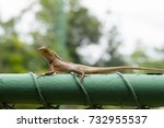 the lizard | Shutterstock . vector #732955537