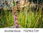 a close up macro view of tiny... | Shutterstock . vector #732961729