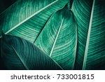 tropical leaf texture  dark... | Shutterstock . vector #733001815