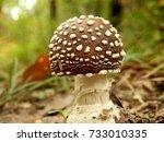 Close Up Of A Young Specimen O...