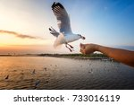 hungry seagull took food from a ... | Shutterstock . vector #733016119