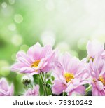 Beautiful Pink Flowers In The...