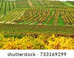 a view of the vineyards.  | Shutterstock . vector #733169299