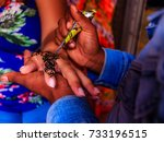 henna is a dye prepared from... | Shutterstock . vector #733196515