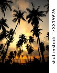 coconut palms on sand beach in... | Shutterstock . vector #73319926