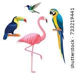 exotic tropical birds  ... | Shutterstock .eps vector #733219441