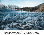 Frozen Ground Wit Ice And Gras...