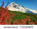 Small photo of Early snow on Mt. Hood contrast nicely in this autumn landscape of lush evergreen forest, blue skies and bright autumn colors of foreground shrub. shrub
