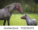 young andalusian horse with... | Shutterstock . vector #733256191
