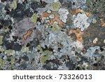 Grey Stony Surface Is Overgrow...