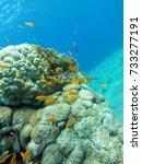 shore dive in eilat israel   Shutterstock . vector #733277191