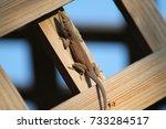 a lazy lizard soaking up the... | Shutterstock . vector #733284517
