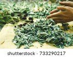 Dry Plants Of Herbs And Flower...