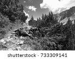mountaineering on the... | Shutterstock . vector #733309141