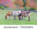 the pasture of three horses and ... | Shutterstock . vector #733326841