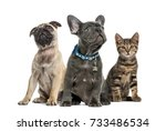 Stock photo group of puppies and cat sitting isolated on white 733486534